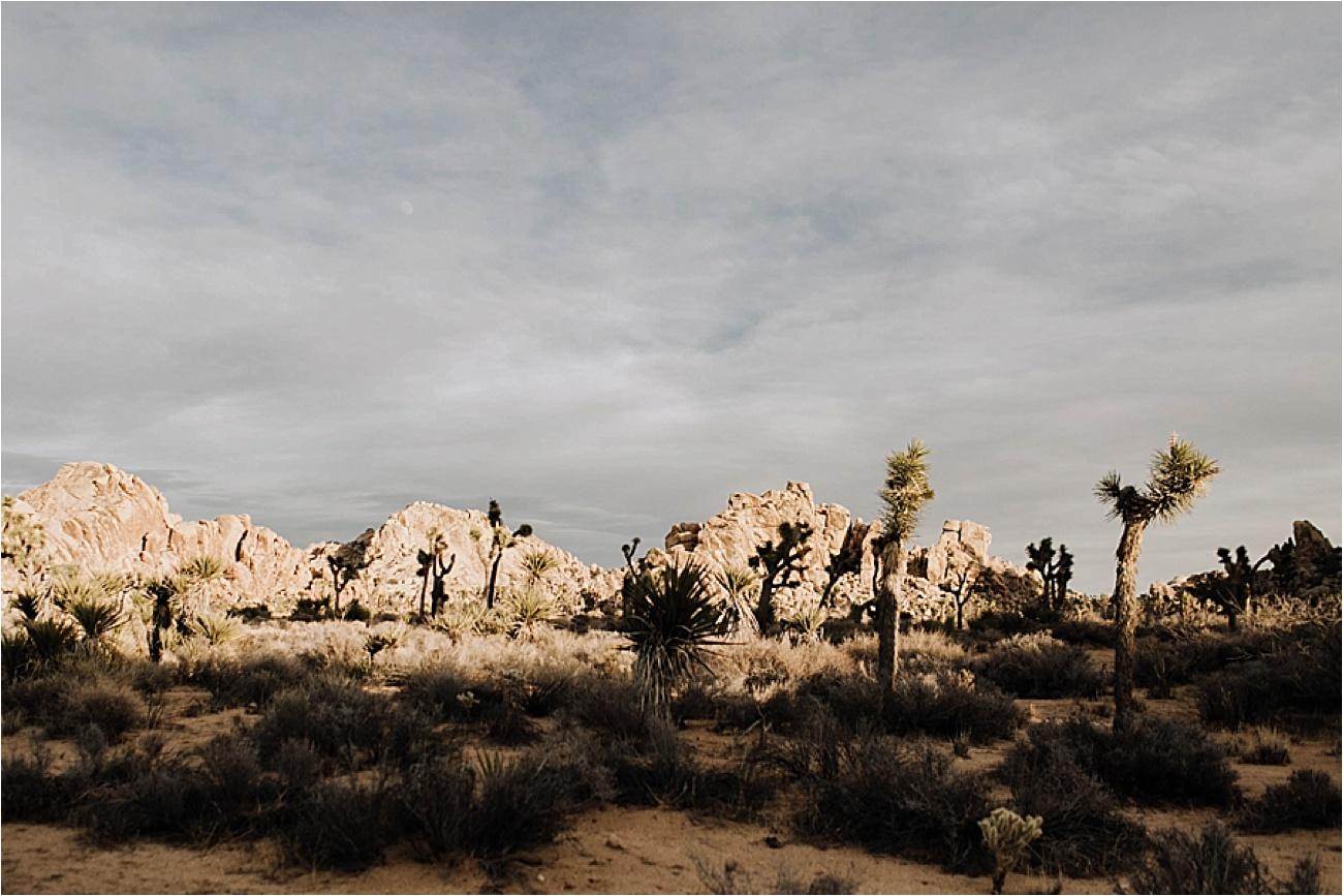 Joshua Tree Engagement Session | www.alexandriamonette.com