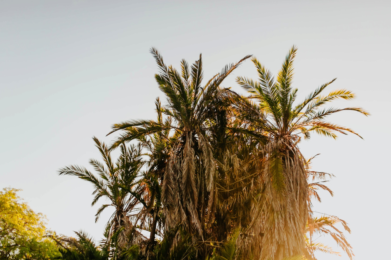 Los Angeles Photographer | http://alexandriamonette.com
