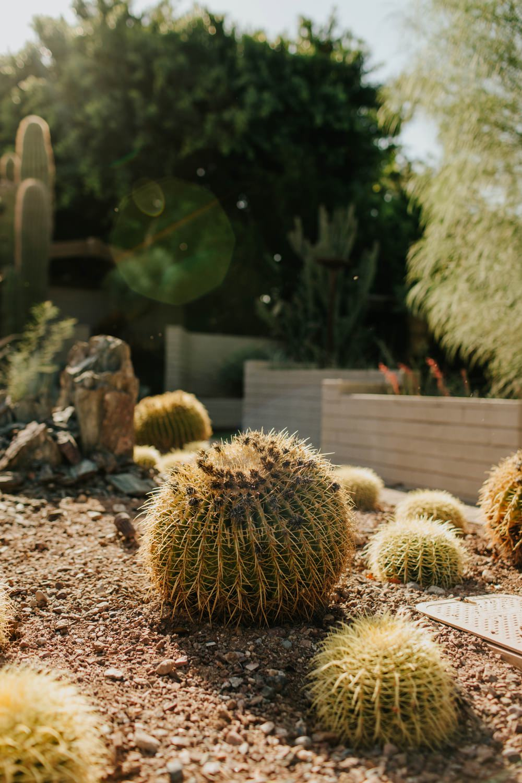 Scottsdale Arizona Photographer | https://alexandriamonette.com